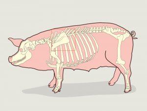 Post Boston Butt Radiografia